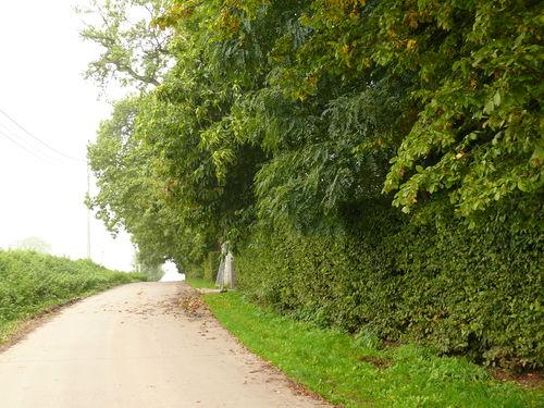 Maarkdal Bossenaarstraat Haagbeuken afsluitingshaag bij Hof te Cattebeke (6)