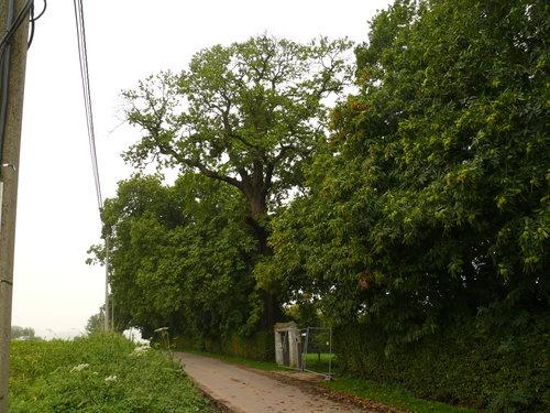 Maarkedal Bossenaarstraat 14 Bomenrij van tamme kastanje bij het Hof te Cattebeke (2)