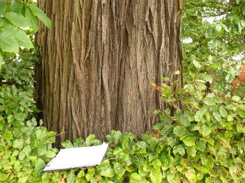 Maarkedal Bossenaarstraat 14 Bomenrij van tamme kastanje bij het Hof te Cattebeke (6)