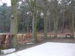 Bomenrij met opgaande lindes