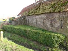 Geschoren buxusaanplanting