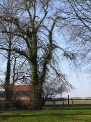 Treuriep Coolsenhof