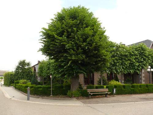 Voeren Moelingen Driesch Gekandelaarde linde met boomkruis op hoek van wegen