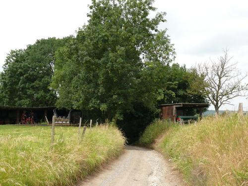 Voeren Moelingen Holleweg houtkant op talud langs holle weg