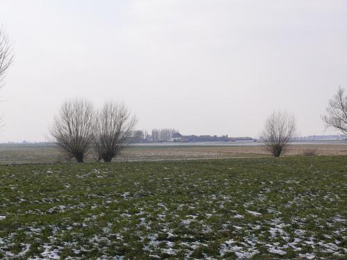 Poperinge Bethunestraat Knotpopulierenrij (3)