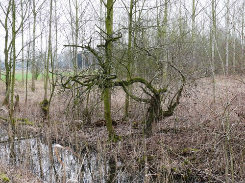 Bornem Kasteeldomein Marnix van Sint-Aldegonde Mispels (1)