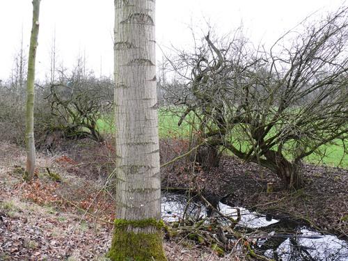Bornem Kasteeldomein Marnix van Sint-Aldegonde Mispels (4)