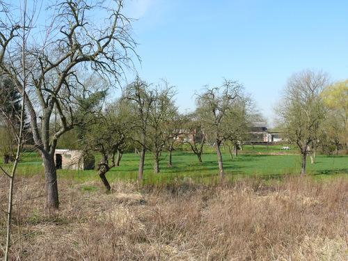 Bornem Rijksweg Hoogstamboomgaard (1)