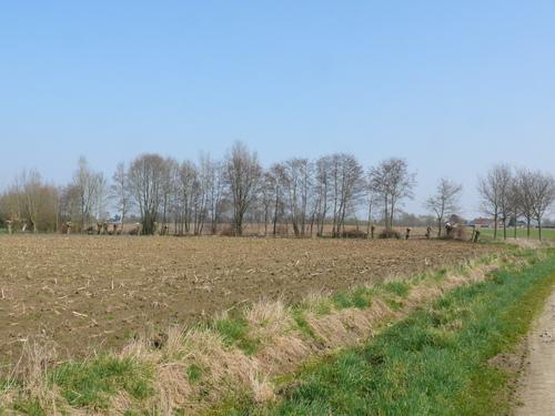 Bornem Barelstraat Knotbomen en hakhout vlasrootput (1)