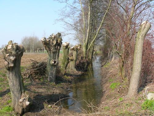 Bornem Barelstraat Knotbomen en hakhout vlasrootput (2)