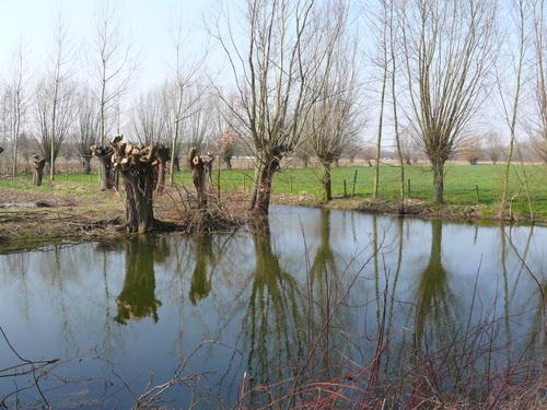 Bornem Barelstraat Knotbomen en hakhout vlasrootput (7)