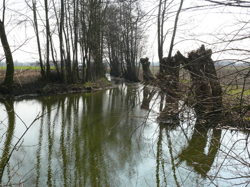 Bornem Barelstraat Knotbomen en hakhout vlasrootput (11)