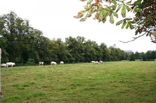 Nazareth Kasteelstraat Dreef paardenkastanjes (2)
