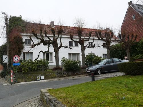 Herzele Steenhuize-Wijnhuize Korrestraat 16 Leilindenrij (1)