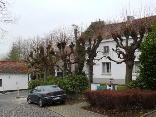 Herzele Steenhuize-Wijnhuize Korrestraat 16 Leilindenrij (5)