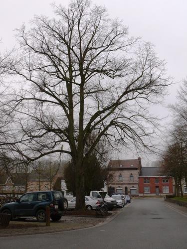 Herzele Steenhuize-Wijnhuize Korrestraat Vredesboom (2)