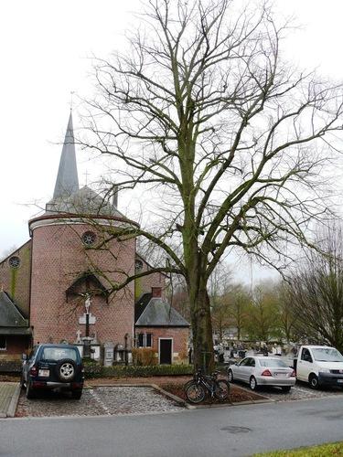 Herzele Steenhuize-Wijnhuize Korrestraat Vredesboom (3)
