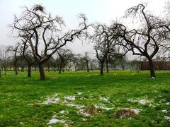Hoogstamweideboomgaard