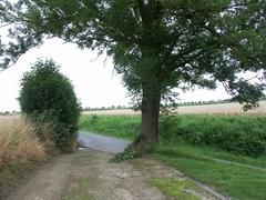 Markeringsboom bij de toegangsdreef tot het Hof 't Hembeke