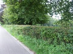 Afsluitingshaag van meidoorn kasteeldomein Beerlegem