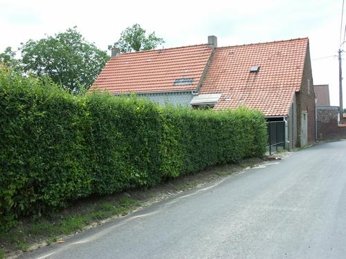 Zwalm Beerlegem Zavelputstraat 12 Olmen afsluitingshaag