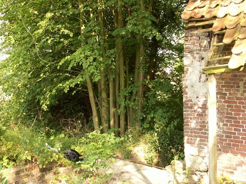Zwalm Nederzwalm Hermelgem Biestmolenstraat 8 Twee schaduwbomen van lindenhakhout bij Vanderlindensmolen