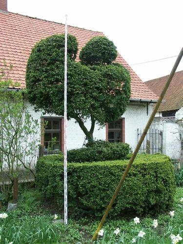 Zwalm Roborst Machelgemstraat 1 Boerentopiary van twee geschoren buxussen
