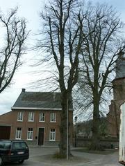 Vier opgaande linden op het kerkplein