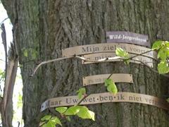 Zwalm Bruggenhoek Zwalmlaan Jagersboom gekandelaarde linde als grens hoek en kruispuntboom (https://id.erfgoed.net/afbeeldingen/194841)