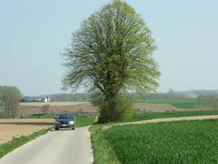 Zwalm Bruggenhoek Zwalmlaan Jagersboom gekandelaarde linde als grens hoek en kruispuntboom (https://id.erfgoed.net/afbeeldingen/194845)