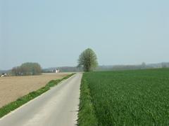 Zwalm Bruggenhoek Zwalmlaan Jagersboom gekandelaarde linde als grens hoek en kruispuntboom (https://id.erfgoed.net/afbeeldingen/194847)