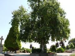 Treures op begraafplaats van Grimbergen