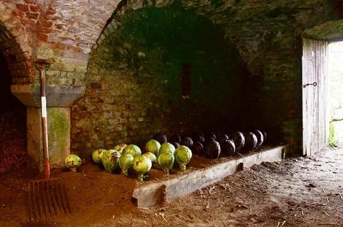 De groentekelder van Hex waar de produktie van de moestuin overwintert