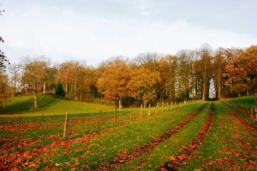 Huwelijkszuil in 1790 opgericht door Joseph-Romain d'Ansembourg in het park van het kasteel van Hex