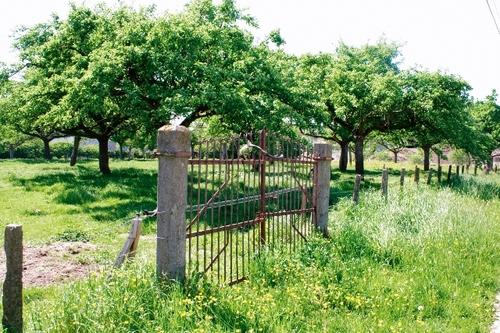 Barrier bij appelboomgaard