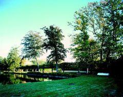 Lindenpalissade en  beuken bij de vijver van het Lombaardenhof