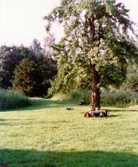 Restanten van de tuin van Hof ter Elst