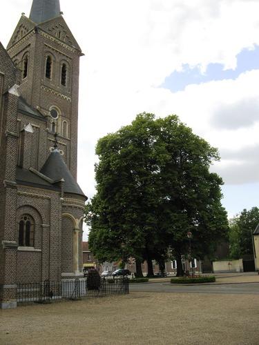 Maasmechelen Dreef zn gerechtsbomen (4)