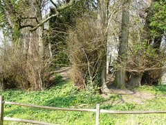 Bomencirkel van opgaande linden bij Kasteel Vilain XIIII