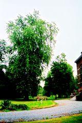 Parkje bij het landhuis Groot Peeteren