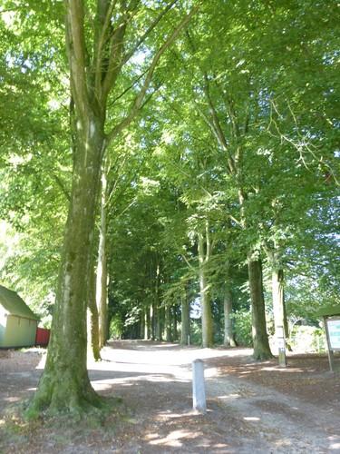 Kruishoutem dreef tussen Lozerstraat en Kasteelstraat