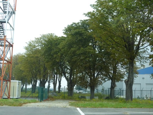 Zaventem Luchthaven dreef kastanjebomen