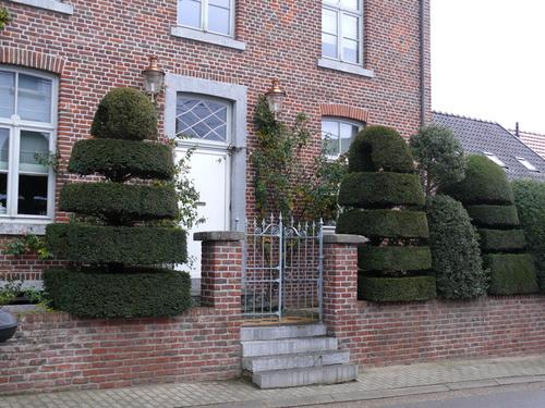 Topiary in de voortuin van huis Robyns
