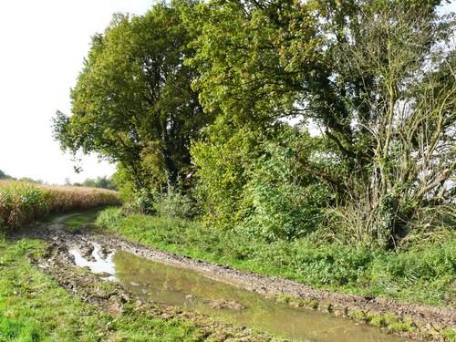 Beersel Alsemberg Begijnenbosweg Houtkant op talud en oude knoteiken (8)