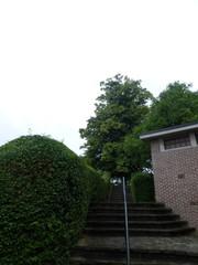 Linde op motteheuvel