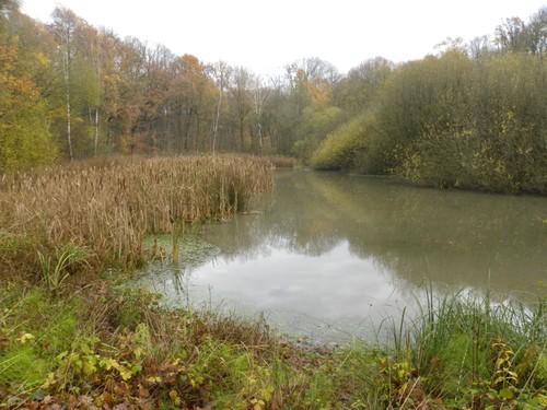 Zwarte vijver in het bos bij domein Nieuwenhoven