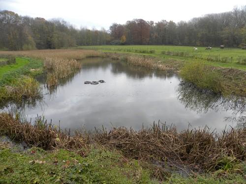 Vijver ten zuidwesten van het kasteel Nieuwenhoven