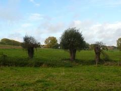 Knotbomenrijen en houtkanten - Sassegembeekvallei