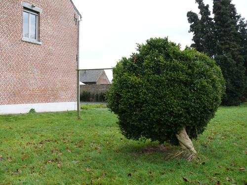 Landen Attenhoven St-Petrusstraat 17 Geschogen buxus in pastorietuin