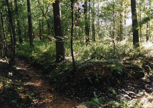 Kapellen-Streepstraat: de bossen van Het Rood